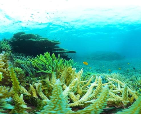 realidad virtual coral